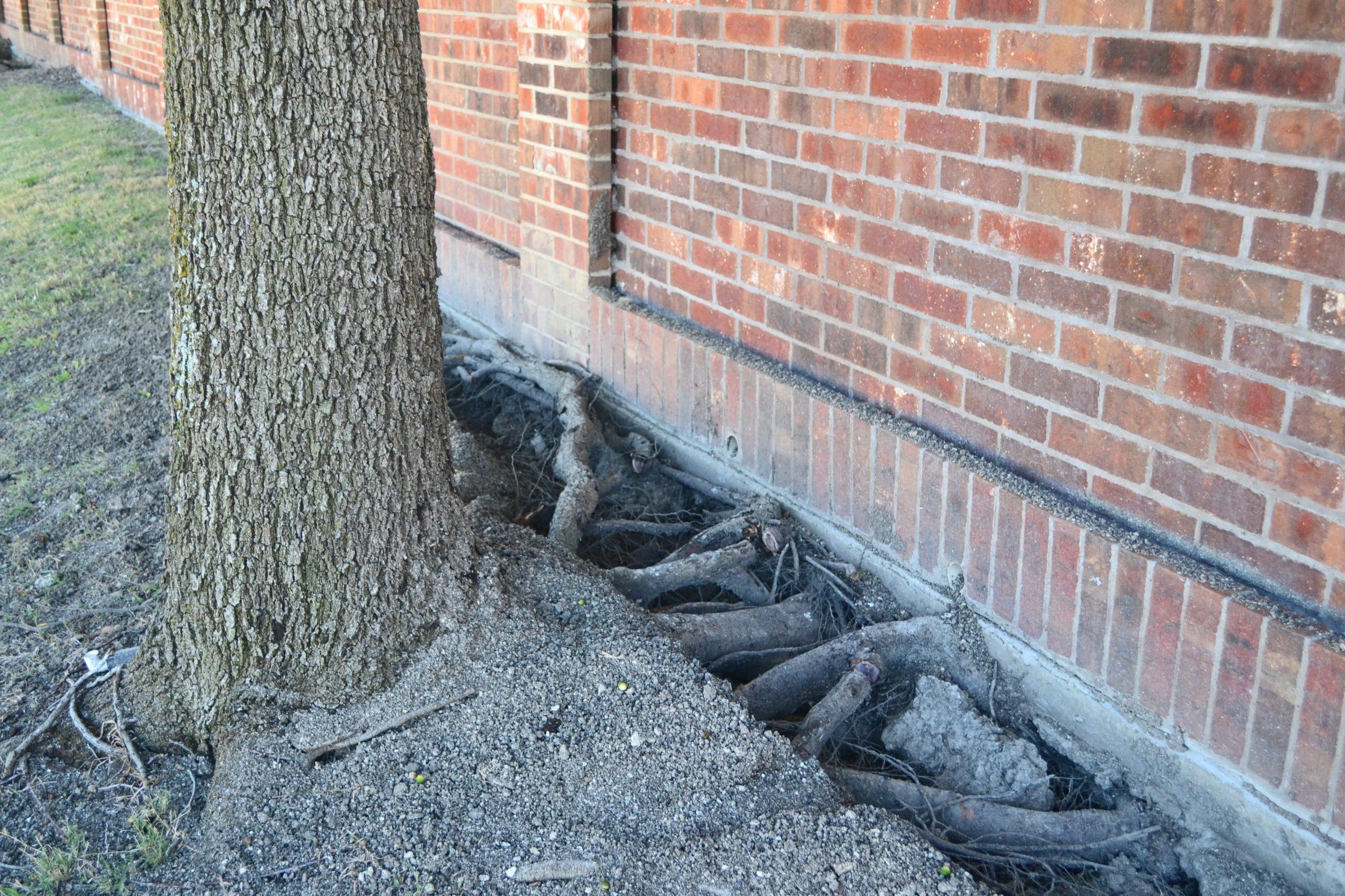 Foundation Tree Damage